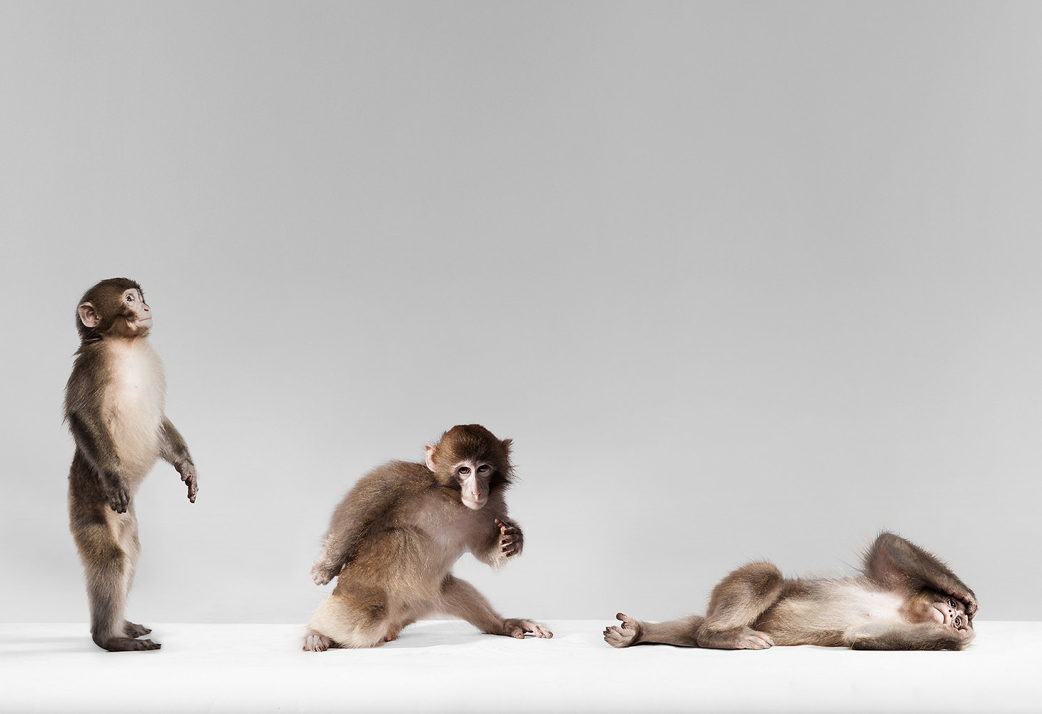 Monkey Moves, © HollenderX2, Brooklyn, First Place Professional : Animal Portraits, PDN Faces - Portrait Photography Contest