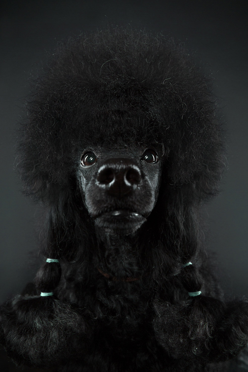 The Dog Show, © Alexander Khokhlov, Moscow, Russia, Professional : Animal Portraits, PDN Faces - Portrait Photography Contest