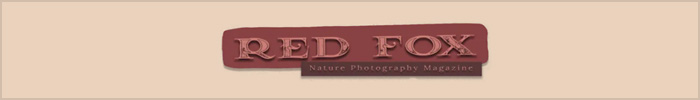 Annual Contest - Red Fox Nature Photography Magazine