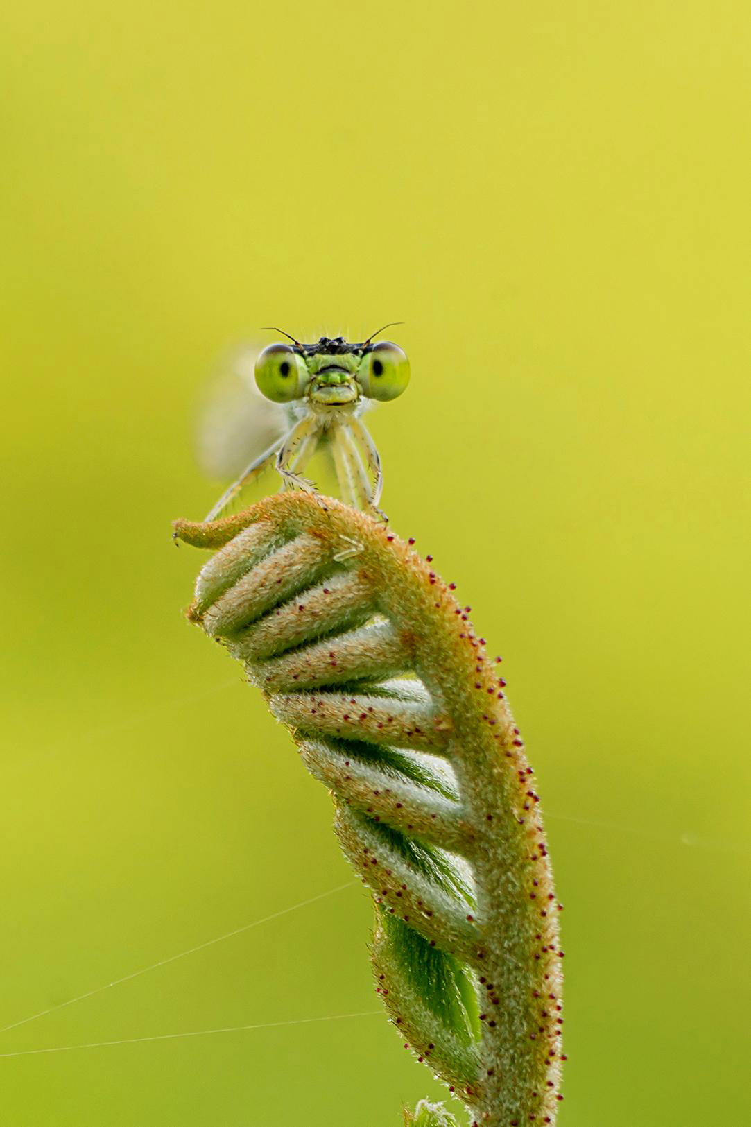 Beautiful Damselfly in the Garden, © Priyank Dhami, 3rd Welcoming Garden Wildlife Category, RHS Photographic Competition