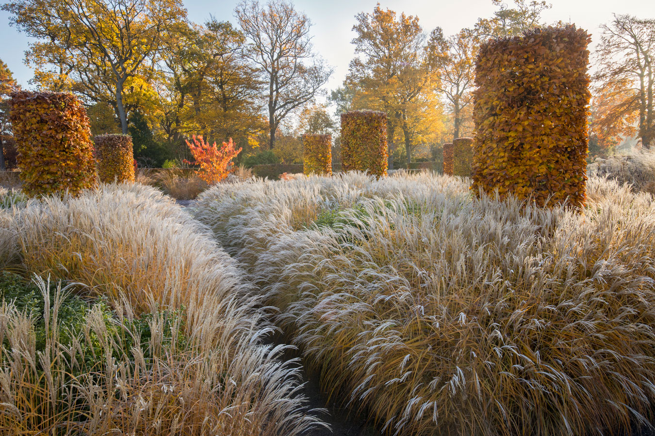 The Soft Hues Of Autumn At RHS Garden Wisley, © Marianne Majerus, Winner Celebrating Gardens Category, RHS Photographic Competition