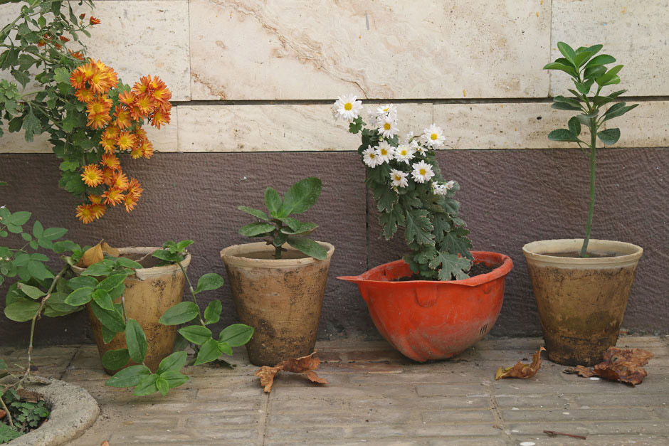 Special Pot, © Mehdi Babadi, 3rd Urban Gardening Category, RHS Photographic Competition