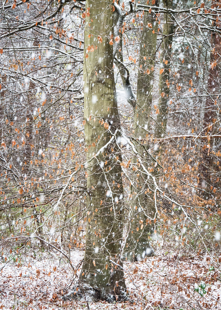 Snow Showers, © Paula Cooper, Winner Social Media Category, RHS Photographic Competition