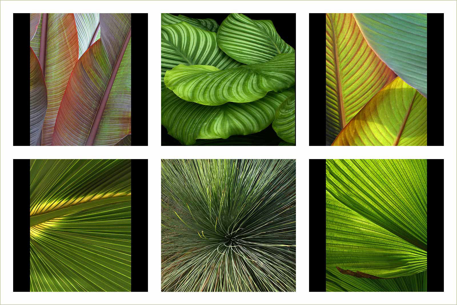 Abstract Images RHS Garden Wisley, © Nigel Chapman, Gold Portfolio Category, RHS Photographic Competition