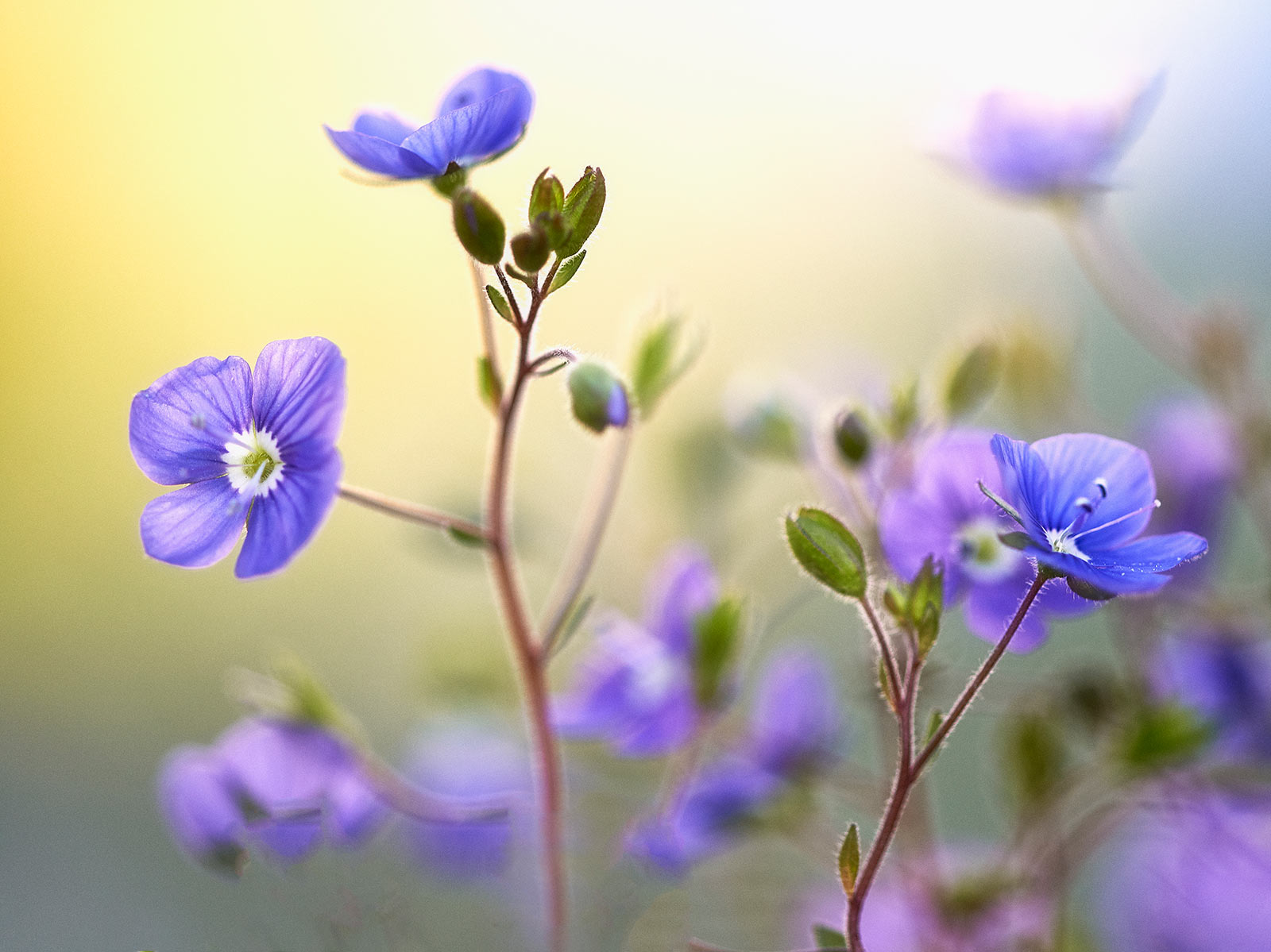 Spring, © Dianne English, Winner in category Pure Plants, Overall Winner, RHS Photographic Competition / RHS Gardening