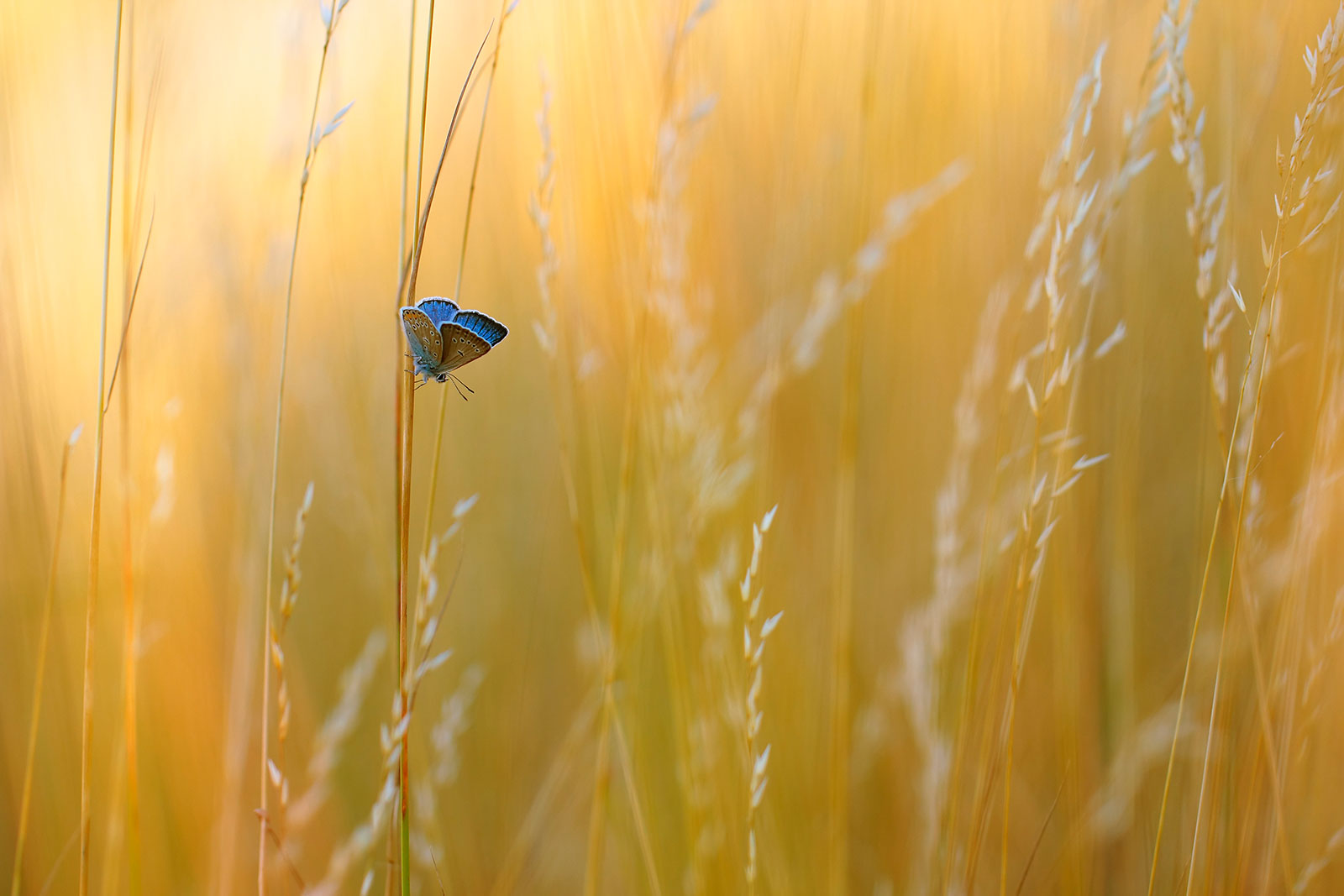 Just Blue, © Marek Mierzejewski, Winner in category Welcoming Garden Wildlife, RHS Photographic Competition / RHS Gardening