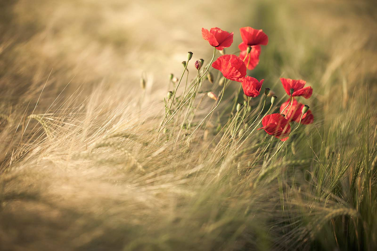 © Justin Minns, Winner in category Social Media, RHS Photographic Competition / RHS Gardening