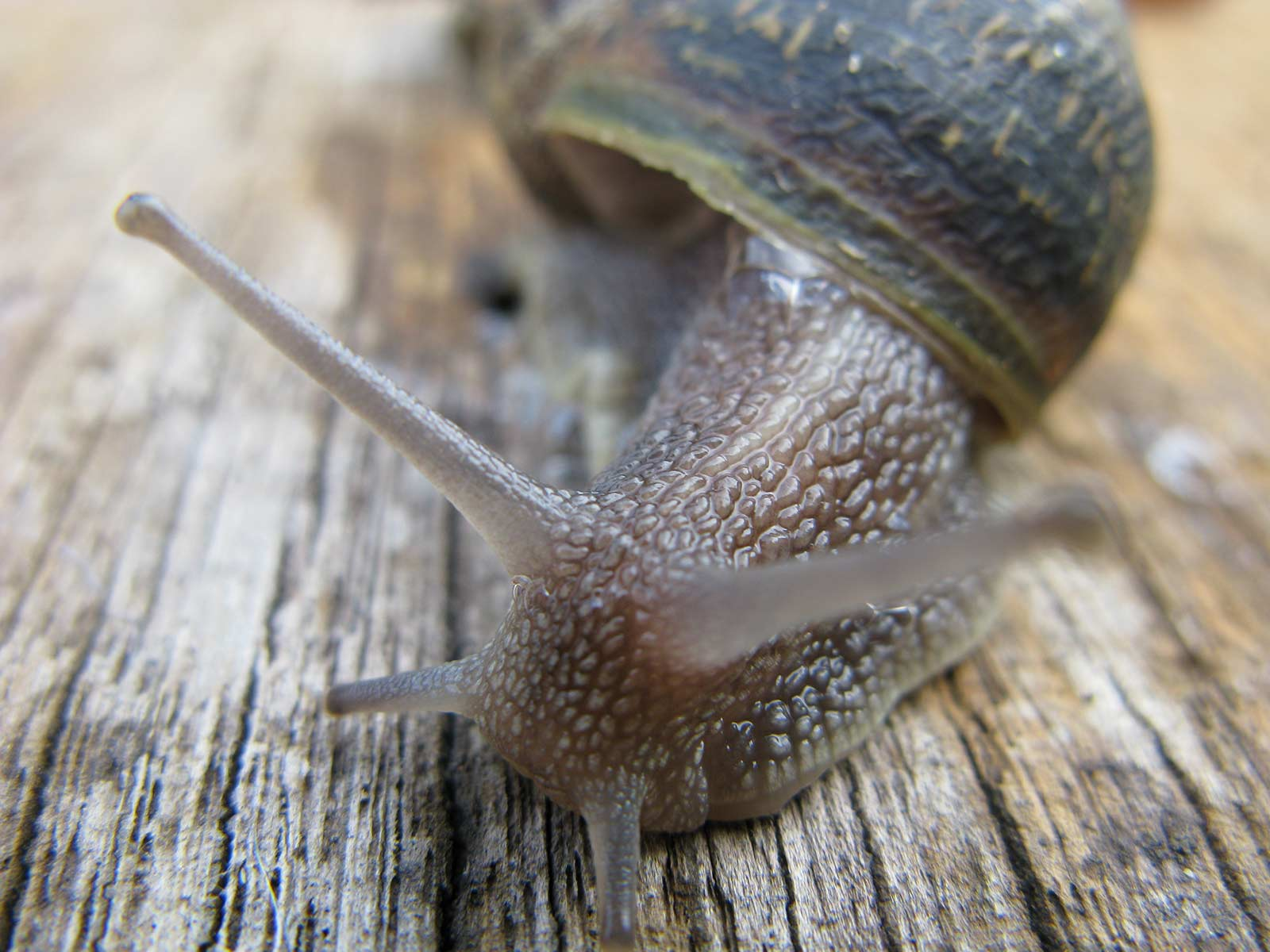 Snail, © Reuben Grey Ford, Winner in category Children's Photographer under 11, RHS Photographic Competition / RHS Gardening