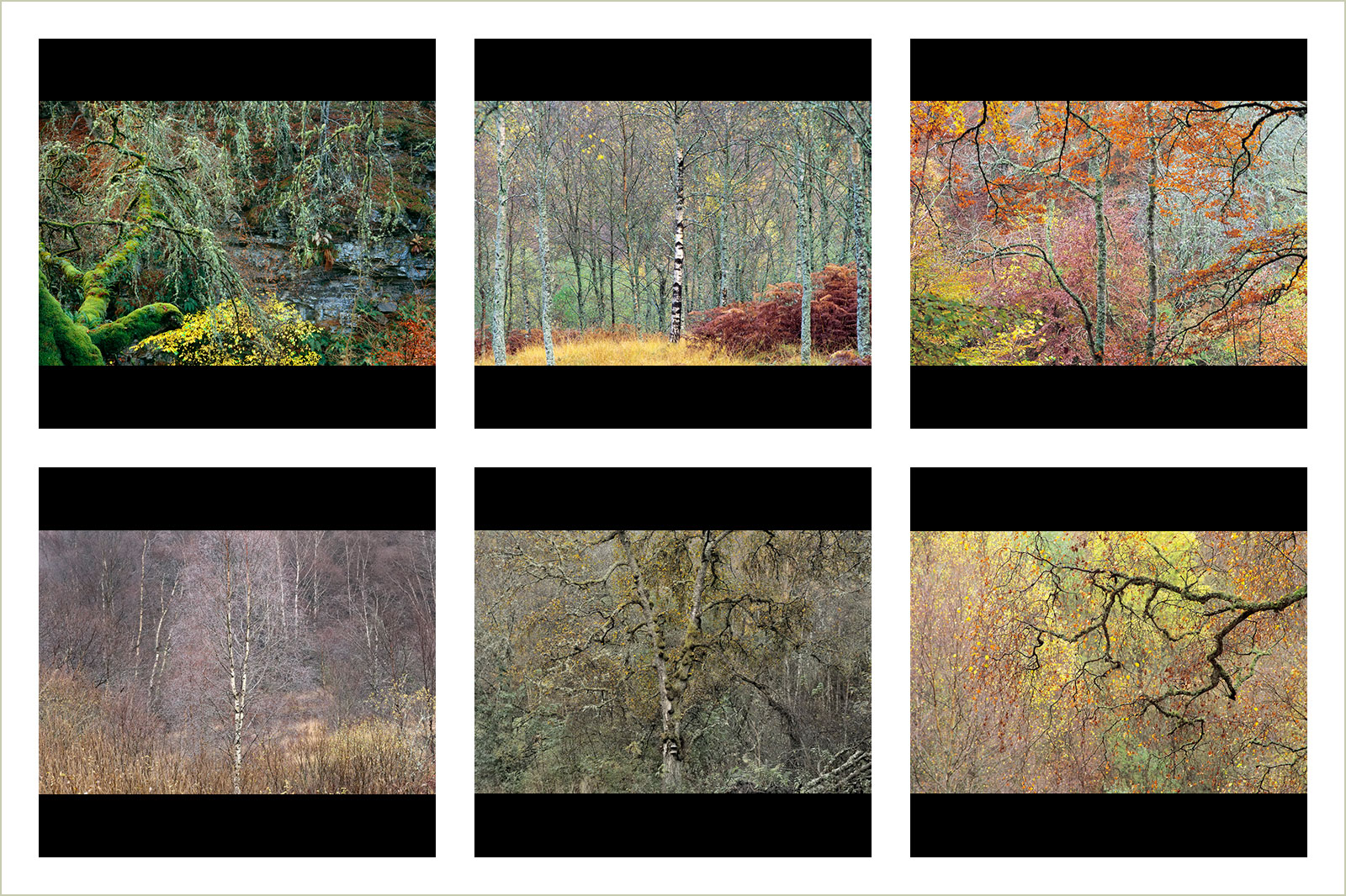 Beech and Birch, © Stephen Whitehorne, Winner in category Portfolio, RHS Photographic Competition / RHS Gardening