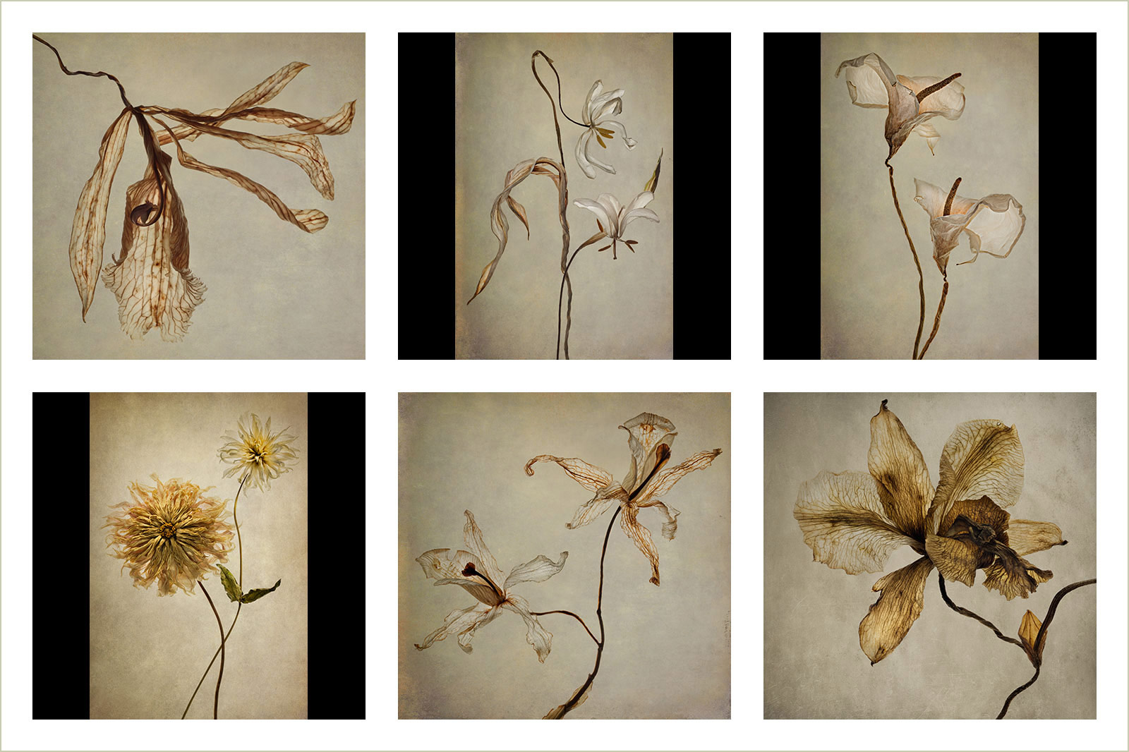 Past Perfect, © Polina Plotnikova, Gold medal winner in category Portfolio, RHS Photographic Competition / RHS Gardening