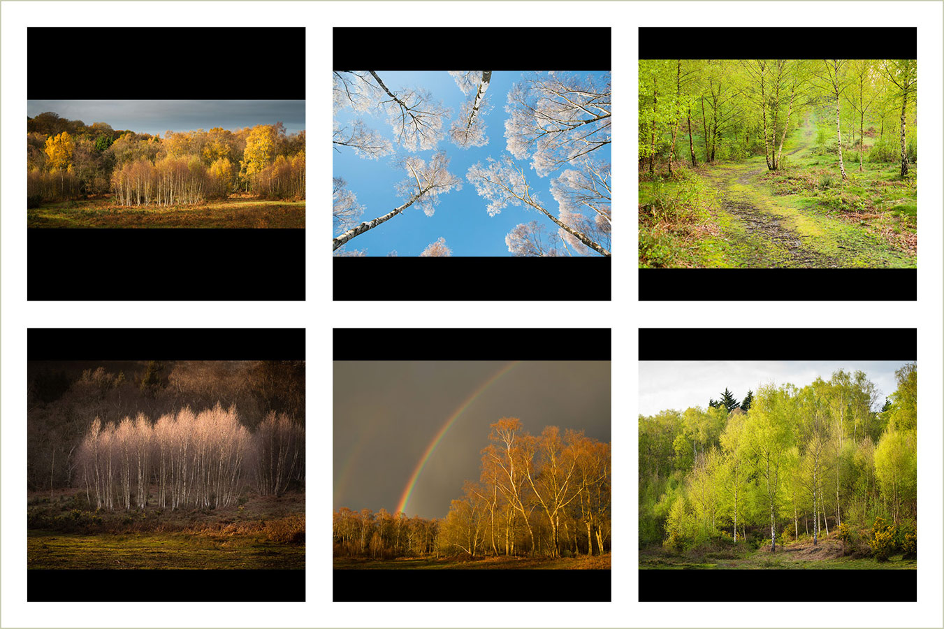 The Beauty of Birch from Autumn to Spring, © Peter Searight, Gold medal winner in category Portfolio, RHS Photographic Competition / RHS Gardening