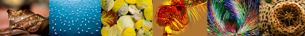 Royal Society of Biology Photography Competition