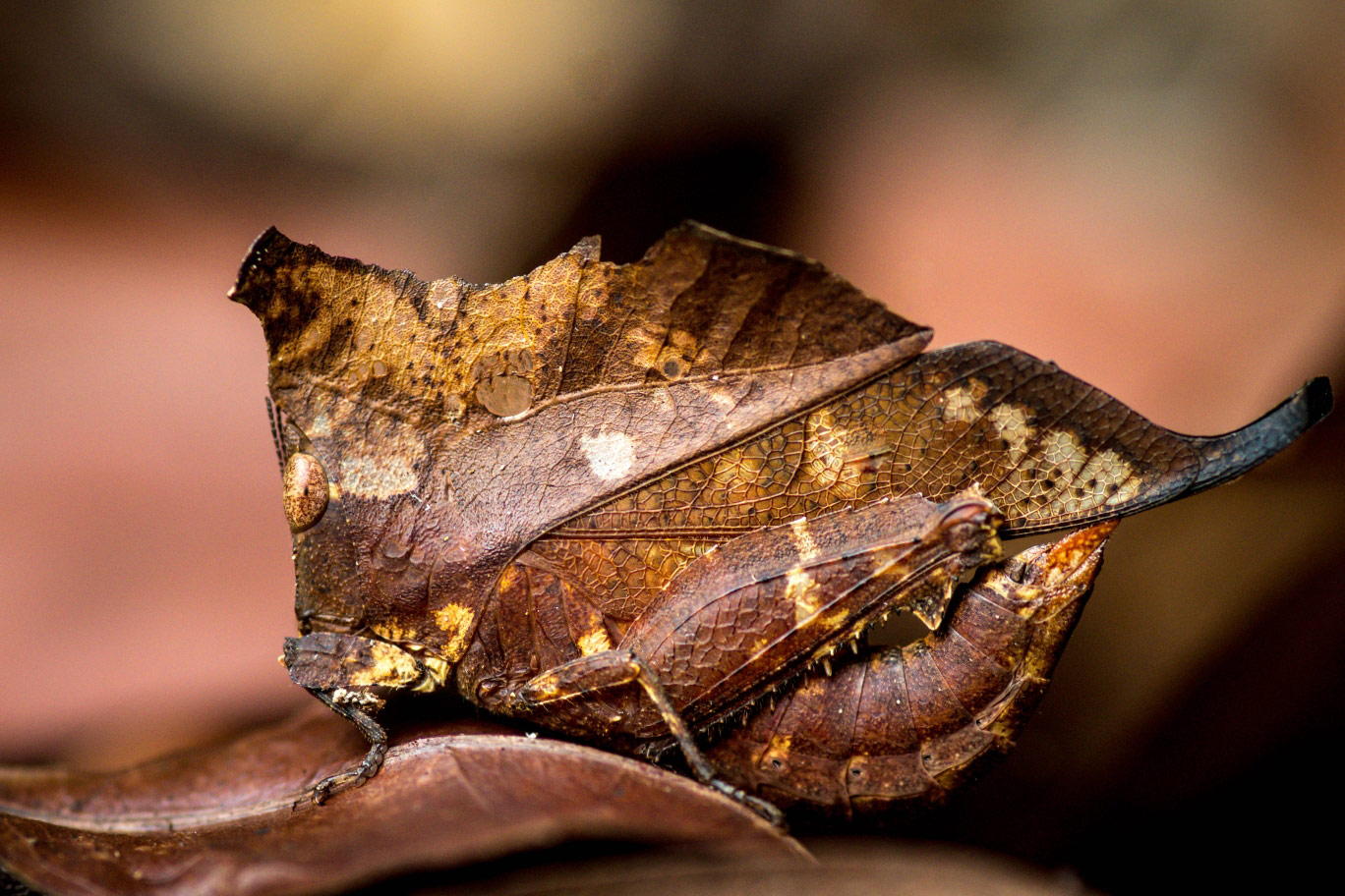 © Guilhem Duvot, Dead leaf or almost, Royal Society of Biology Photography Competition