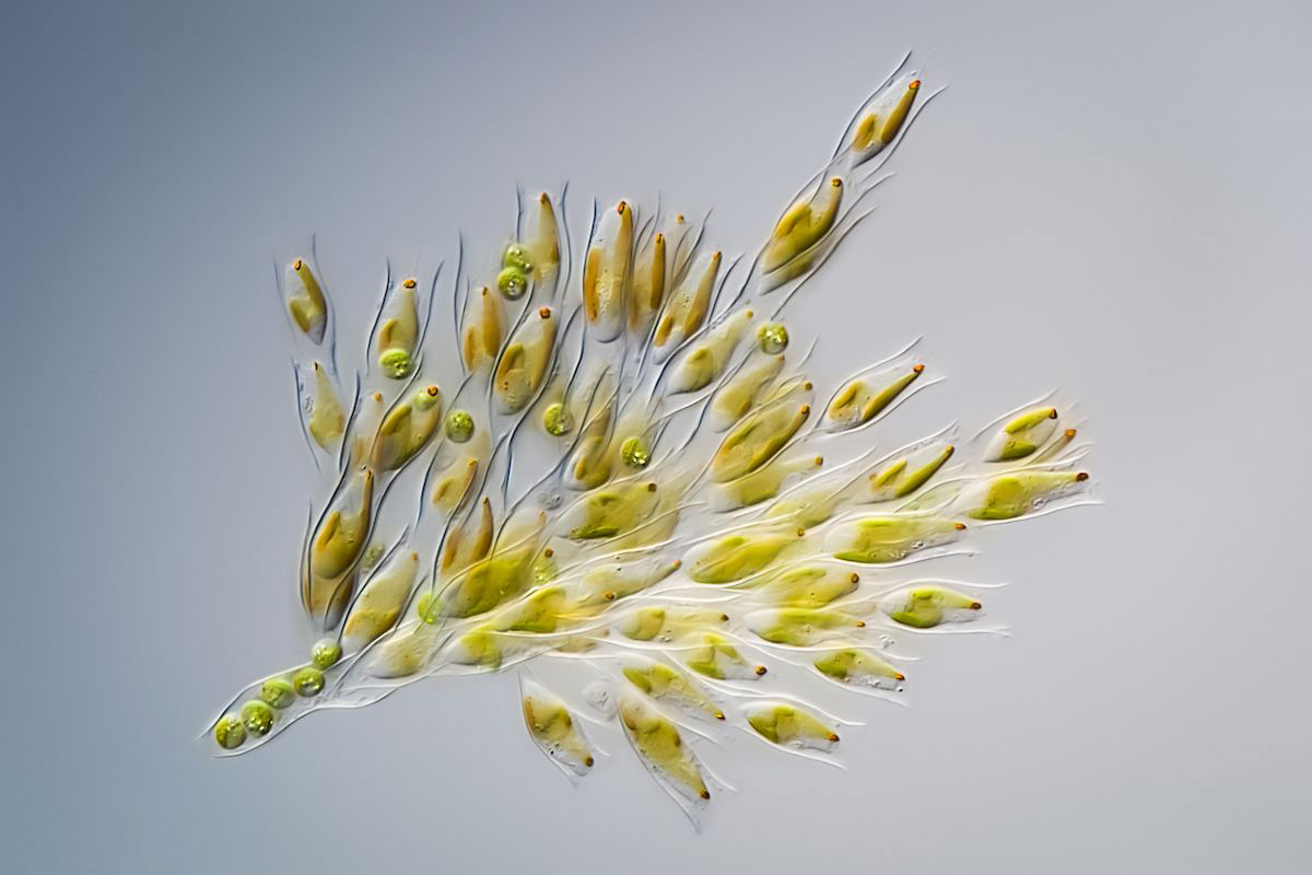 © Håkan Kvarnström, Bouquet de fleurs, Royal Society of Biology Photography Competition