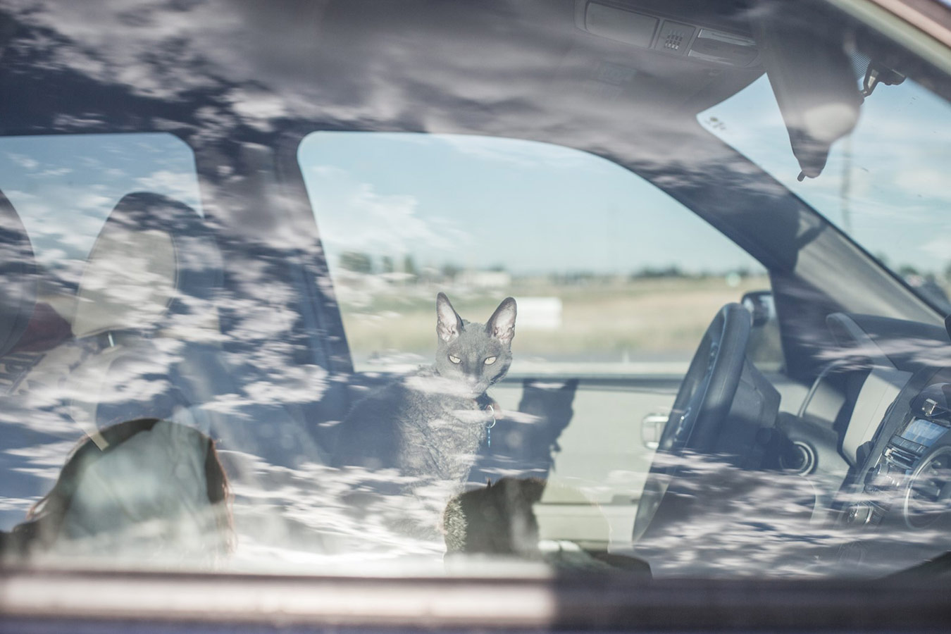 A Cat in a Car, from the series 'The Duke of Earl', © Christopher Bethell (UK), Under 30s Gold Award, RPS International Photography Exhibition (IPE)