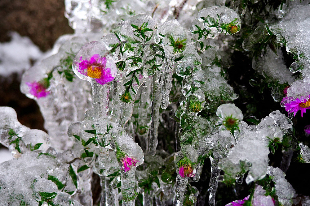 "Crystal flowers, © Daniella Pomazova, Winner in category Young photographer, ""Most Beautiful Country"" Photo Contest"
