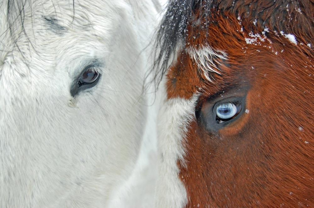 Winter Eyes, © Katherine Ford, Jackson, Wyoming, Santa Fe Photographic