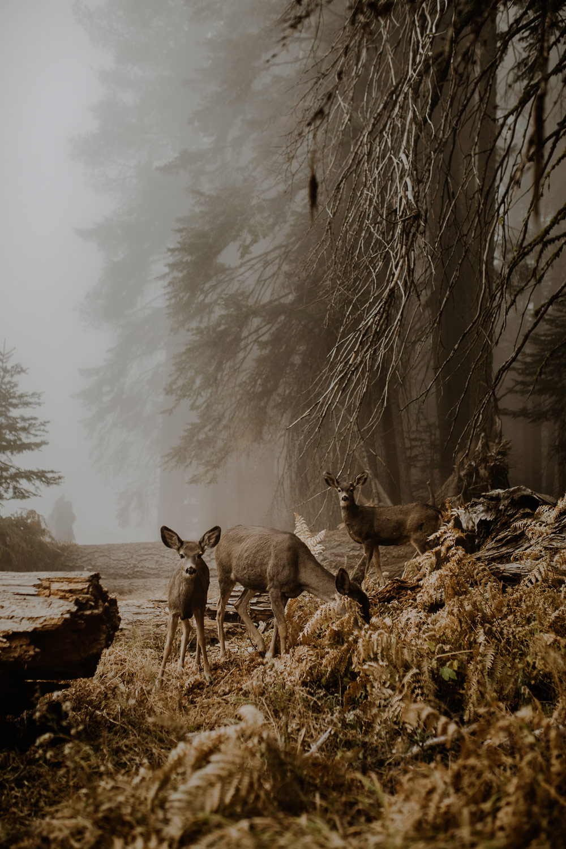 © Justyna Zdunczyk, Poland, Winner, Open Wildlife and Poland National Award, Sony World Photography Awards