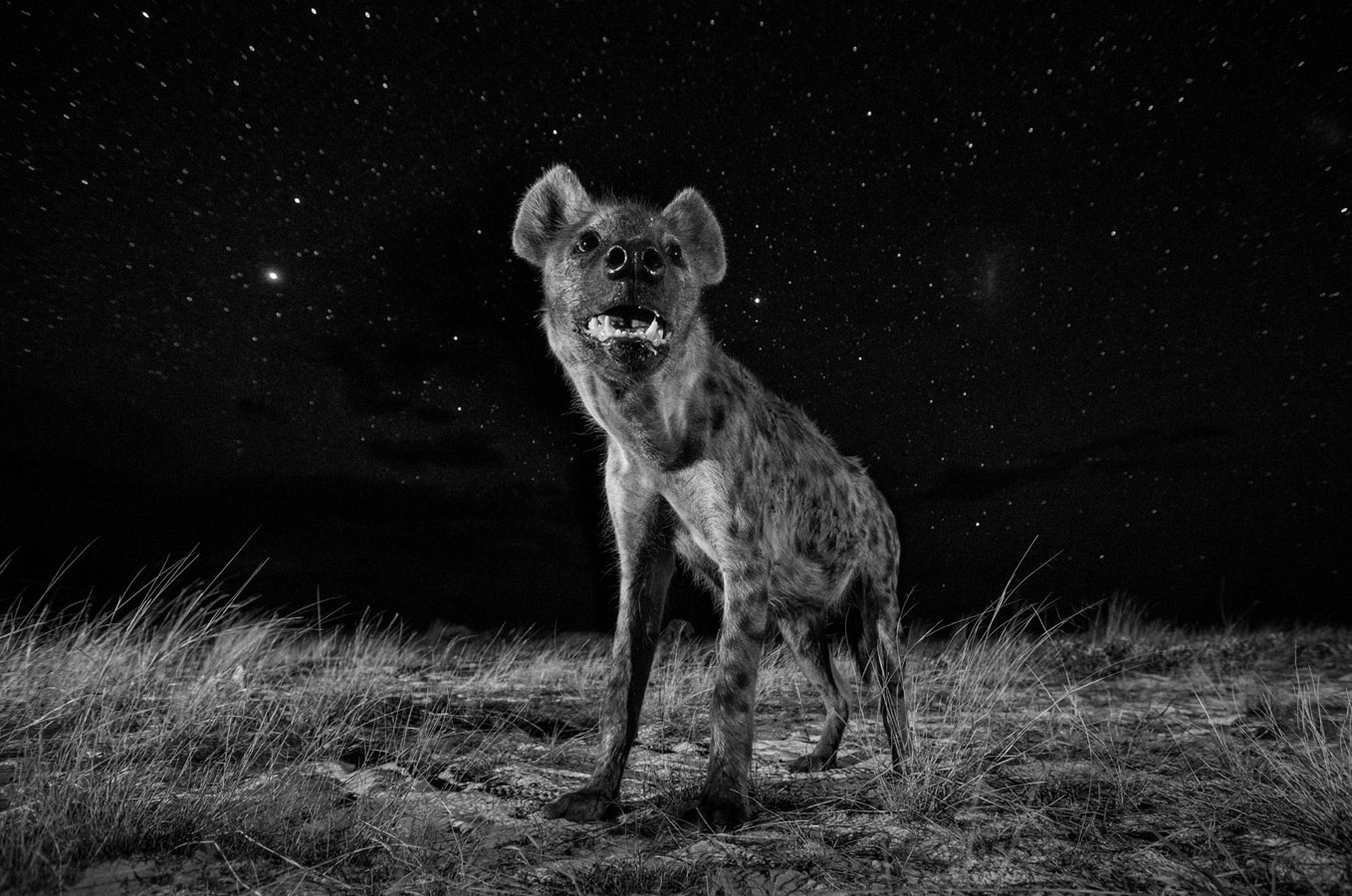 Will Burrard-Lucas, UK, Category Professional, Natural World, Sony World Photography Awards