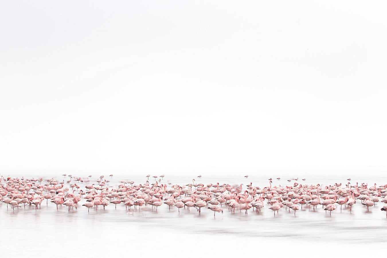 Alessandra Meniconzi , Switzerland, Winner, Open Competition, Wildlife, 2017 Sony World Photography Awards