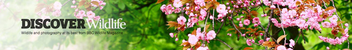 Spring is in the air / BBC Discover Wildlife