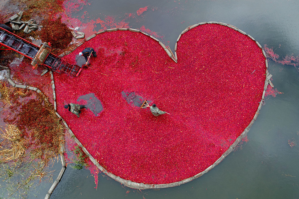 Cranberry Heart, © Sergei Gapon, Belarus, 1st place : My Planet : Single, Andrei Stenin International Press Photo Contest