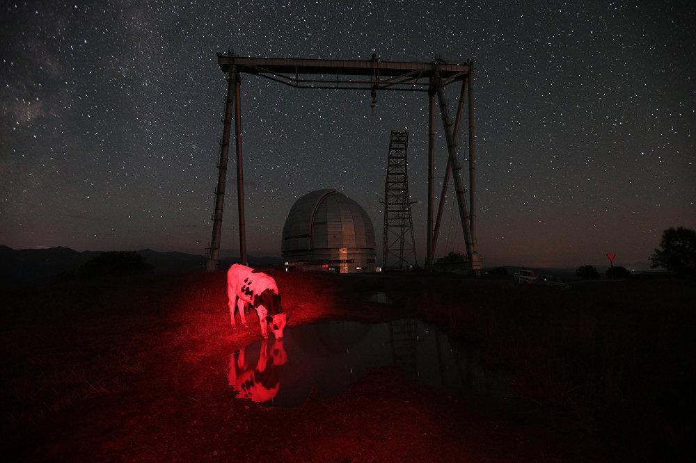 Red cow, © Maria Plotnikova, Russia, 2nd place : My Planet : Single, Andrei Stenin International Press Photo Contest