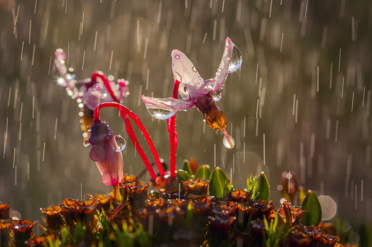 Rain, © Marina Murashova, Finalist in the nomination Nature, Science Elements Photo Contest