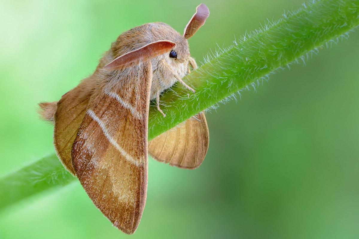 Long-eared, © Alexander Korovin, Finalist in the nomination Microcosm, Science Elements Photo Contest