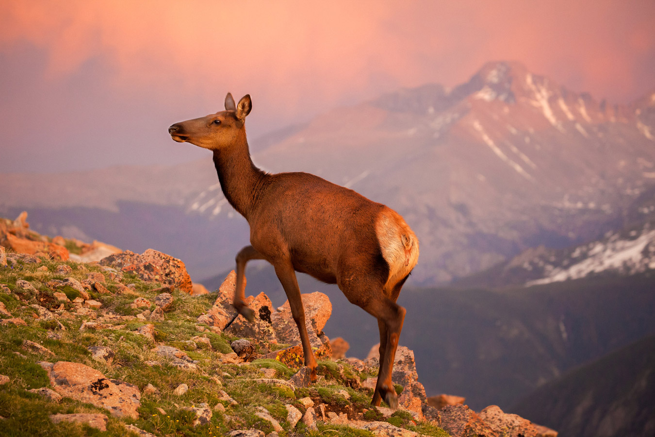 Sunset Elk - Rocky Mountain National Park, © Sue Wright, Mesa, AZ, United States, Amateur : Wildlife/Insects, The Great Outdoors: Landscape & Wildlife Photography Contest