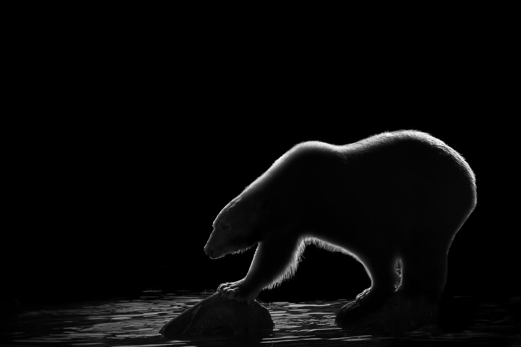 Arctic Light, © Thomas Vijayan, Ontario, Canada, Third Place Winner, Black and White Photography Competition by The Motif Collective