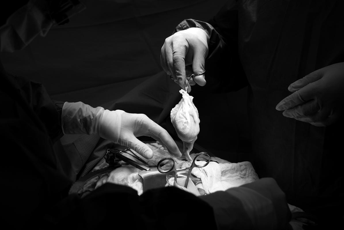 Kidney transplant, © Mohamad Alhasel, Qatar, 1st Place, Tokyo International Foto Awards