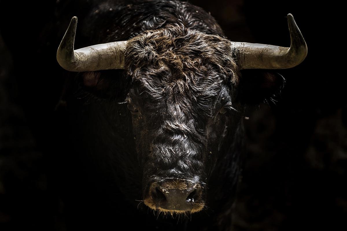Spanish Bullfight, © Jordi Cohen, 1st Place, Tokyo International Foto Awards