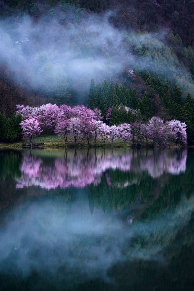 Sakura Guardian, © Comyu Matsuoka, Japan, 1st Place Nature Amateur / Student, Tokyo International Foto Awards