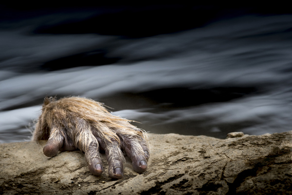© Johan Siggesson, Sweden, One Shot - WILDLIFE, SEALIFE, Travel Photographer of the Year