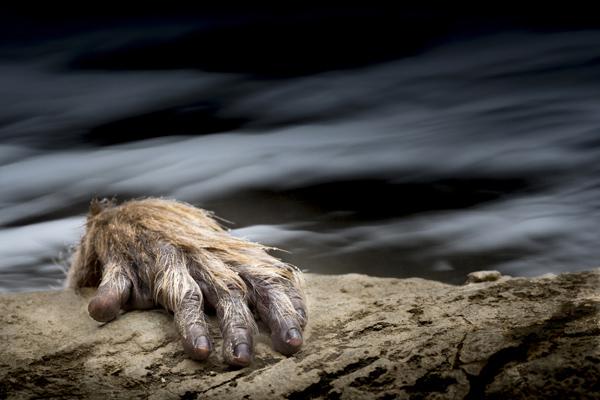 © Johan Siggesson, Sweden, One Shot - WILDLIFE, SEALIFE, Travel Photographer of the Year
