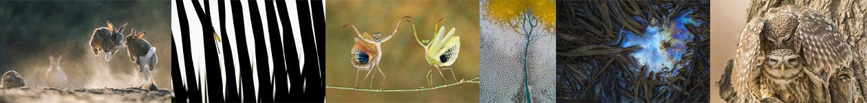 TransNatura International Nature Photo Contest