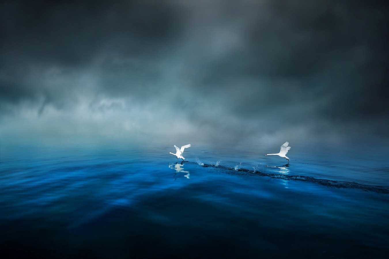 Swans of the Cobalt Blue Lake, © Miskovic Josip, Italy, 2nd place, TransNatura International Nature Photo Contest