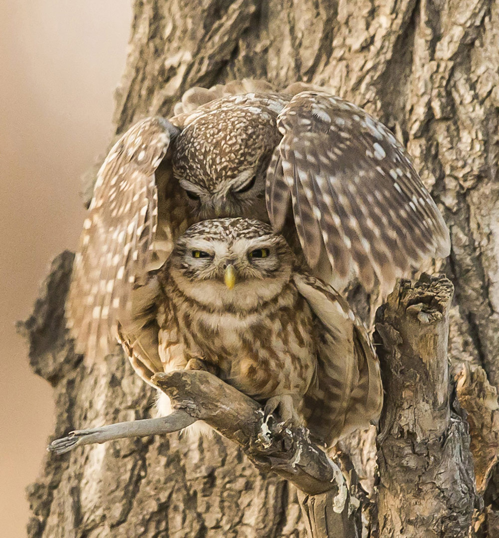 Take Good Care, © Zhong Yi, China, 3rd place, TransNatura International Nature Photo Contest