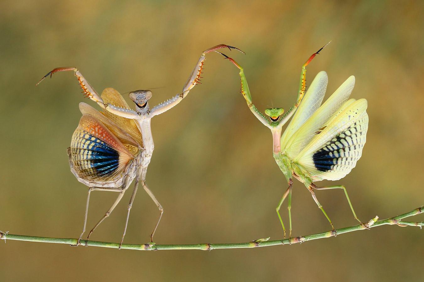 Showtime, © Baglar Hasan, Cyprus, 1st place, TransNatura International Nature Photo Contest