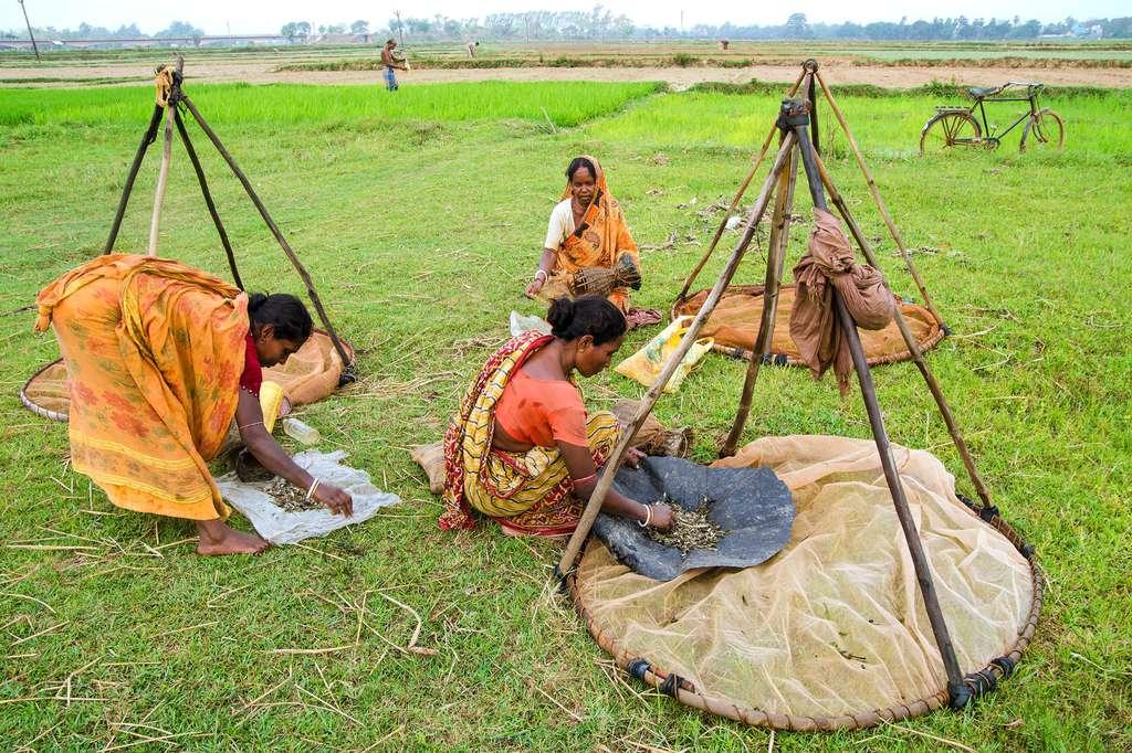 © Sujit Saha, India, Transversalidades Photo Contest