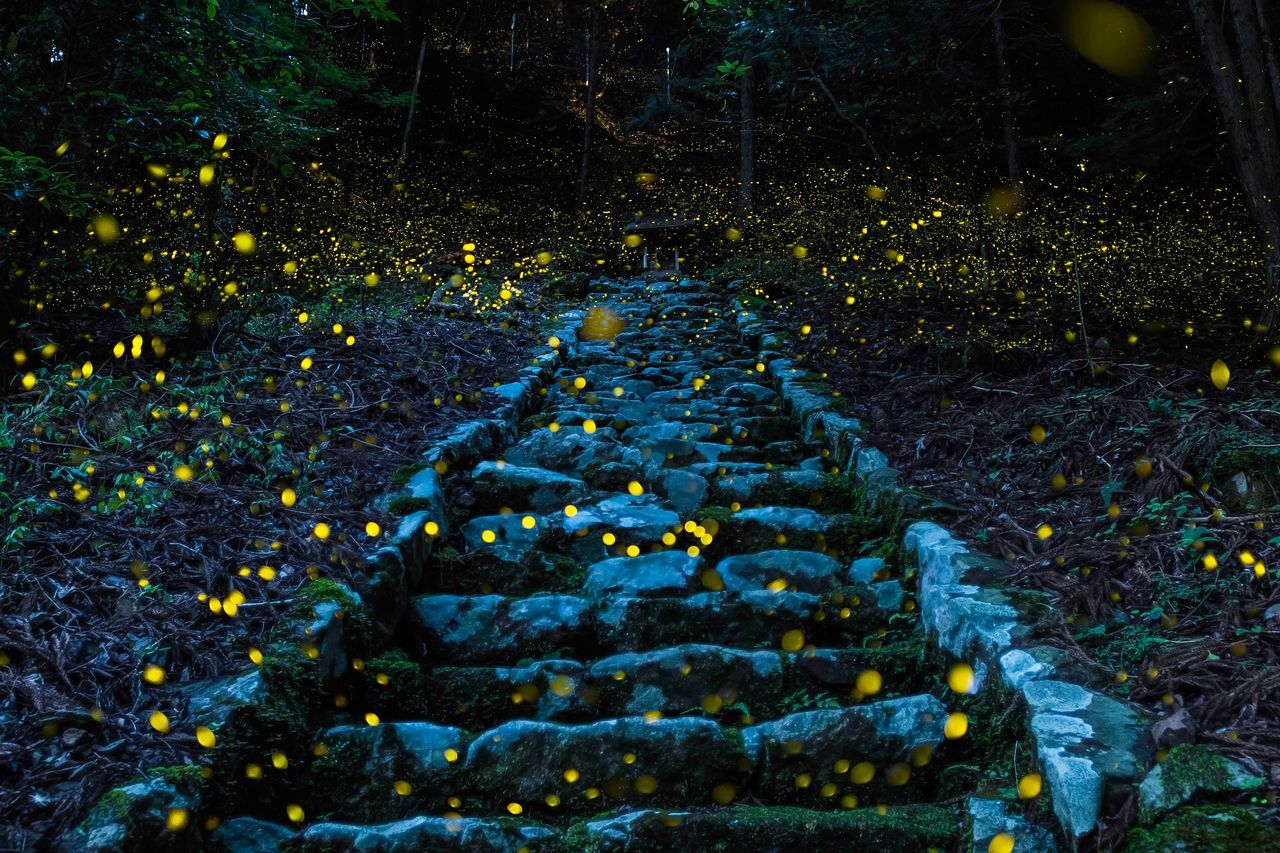 Forest Of The Fairy, © Y. Takafuji, Honorable Mention, Nature, National Geographic Travel Photographer of the Year