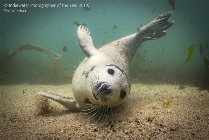 Underwater Photographer of the Year
