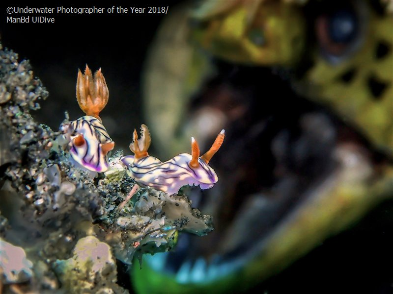 ROAR, © Man BD, Malaysia, Up & Coming Underwater Photographer of the Year, Underwater Photographer of the Year
