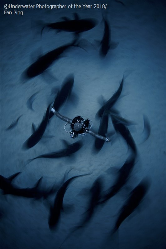 Surrounded, © Fan Ping, China, Wide Angle Runner Up, Underwater Photographer of the Year