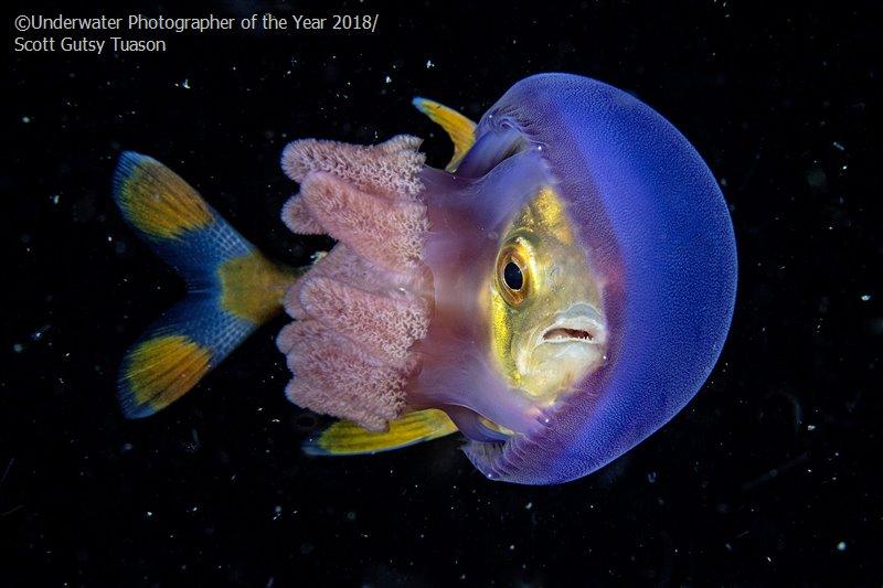 In Hinding, © Scott Gutsy Tuason (Philippines), Behaviour Runner Up, Underwater Photographer of the Year