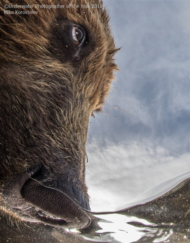 The Nose, © Mike Korostelev (Russian Federation), Portrait Runner Up, Underwater Photographer of the Year