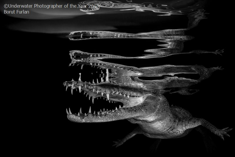 Crocodile Reflections, © Borut Furlan (Slovenia), Black & White Winner, Underwater Photographer of the Year