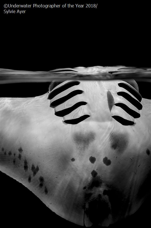 Graceful Manta, © Sylvie Ayer (Switzerland), Black & White Runner Up, Underwater Photographer of the Year