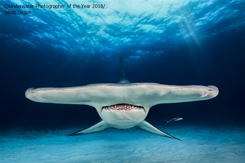 The Hammer, © Jacob Degee (Poland), Up & Coming Runner Up, Underwater Photographer of the Year